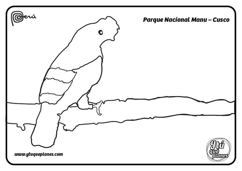 Pinta de verde el Parque Nacional Manu