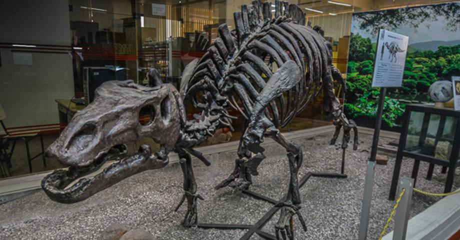 Museo de Historia Natural Vera Alleman Haeghebaert